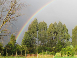 The best rainbows in the World