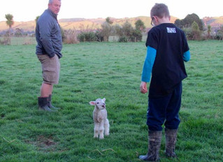 An introduction to sheep husbandry