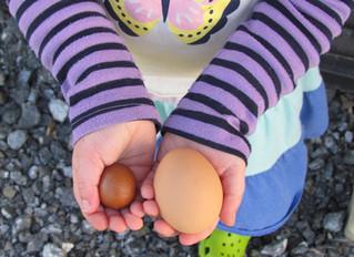 Ever seen a fairy egg?