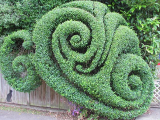 Best hedge artistry of the year award
