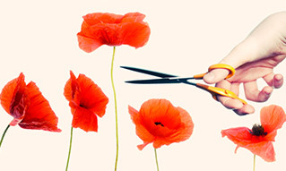 The tall poppy syndrome - how achievers cut themselves down