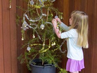 A Christmas totara