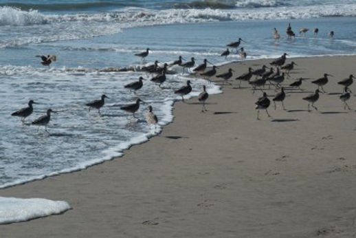 about-fishing-birds-370x315.jpg