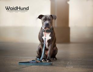 Waidhund 4 - Kopie.jpg