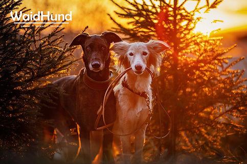 Koda & Faye - Windhund-Zugstop & Leine B