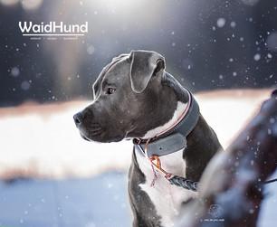 Waidhund Winter - Kopie.jpg