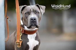 Waidhund2 - Kopie.jpg