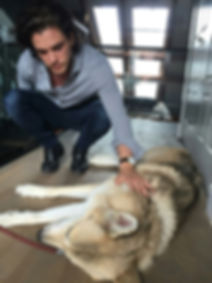 Kit Harington of Game of Thrones with Snowball the Wolfdog of Rare Breed Exotics