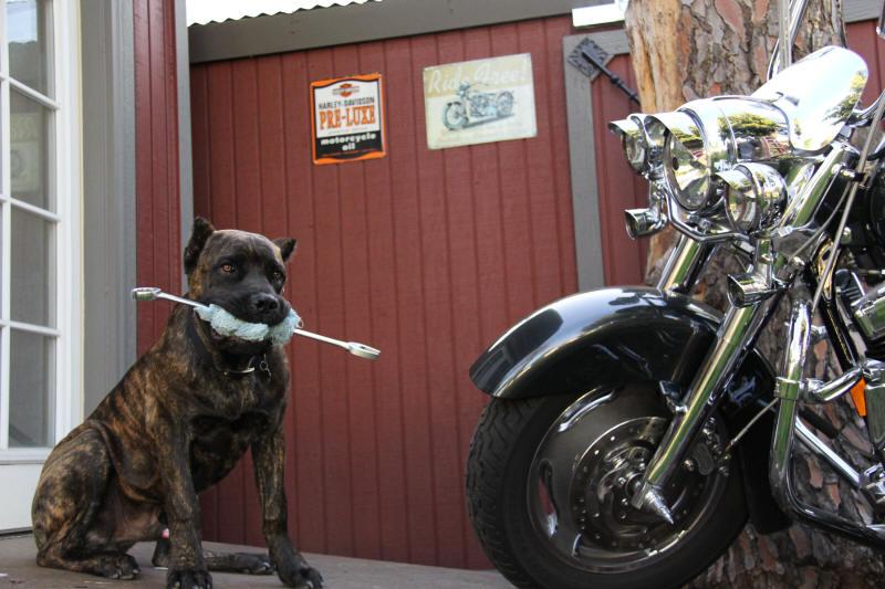 canecorsomotorcycle