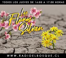 Grafica Promo 2019 - Las Flores SIlvan.p