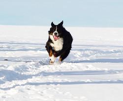 Fayette im Schnee