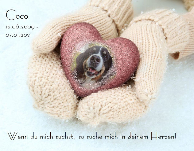 Abschied Coco.jpg