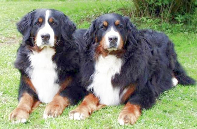 Cachou und Carina