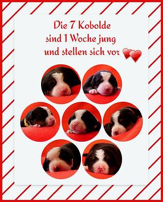 7 Kobolde 1 Woche_edited.jpg