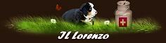 IL Lorenzo.png