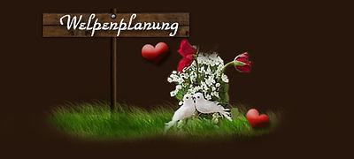 Welpenplanung Cabacasi´s Bernerhaus