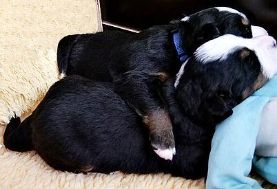 Geschwisterliebe.jpg