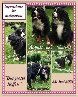 August & Ghasaleh.jpg