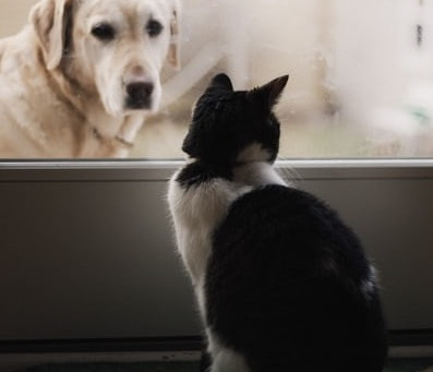 Friend or Companion
