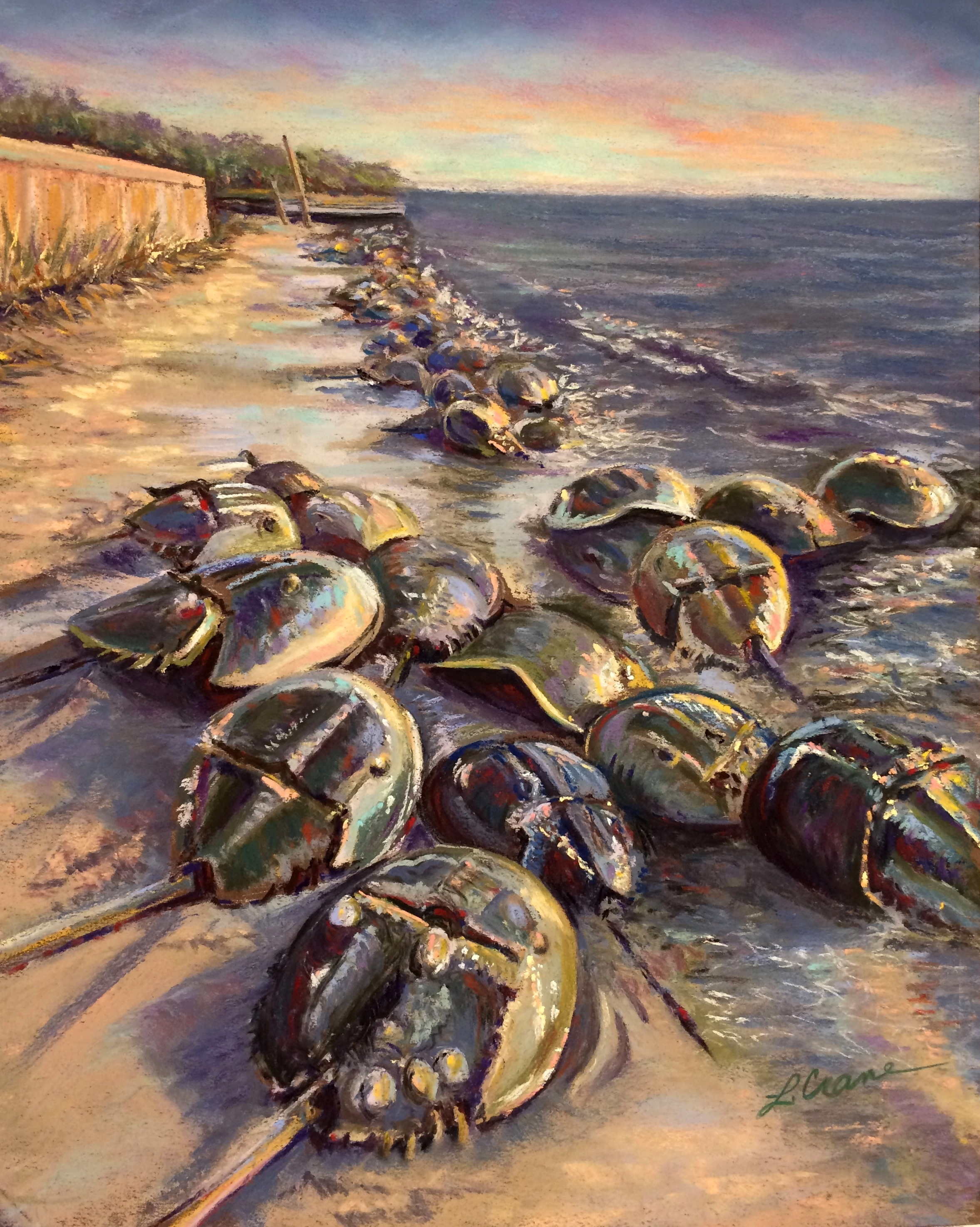 Horseshoe Crabs at Pierce's Point