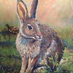 Tortoise & the Hare