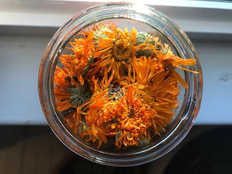 Medicinal Plant Monday: Your Old Friend Calendula