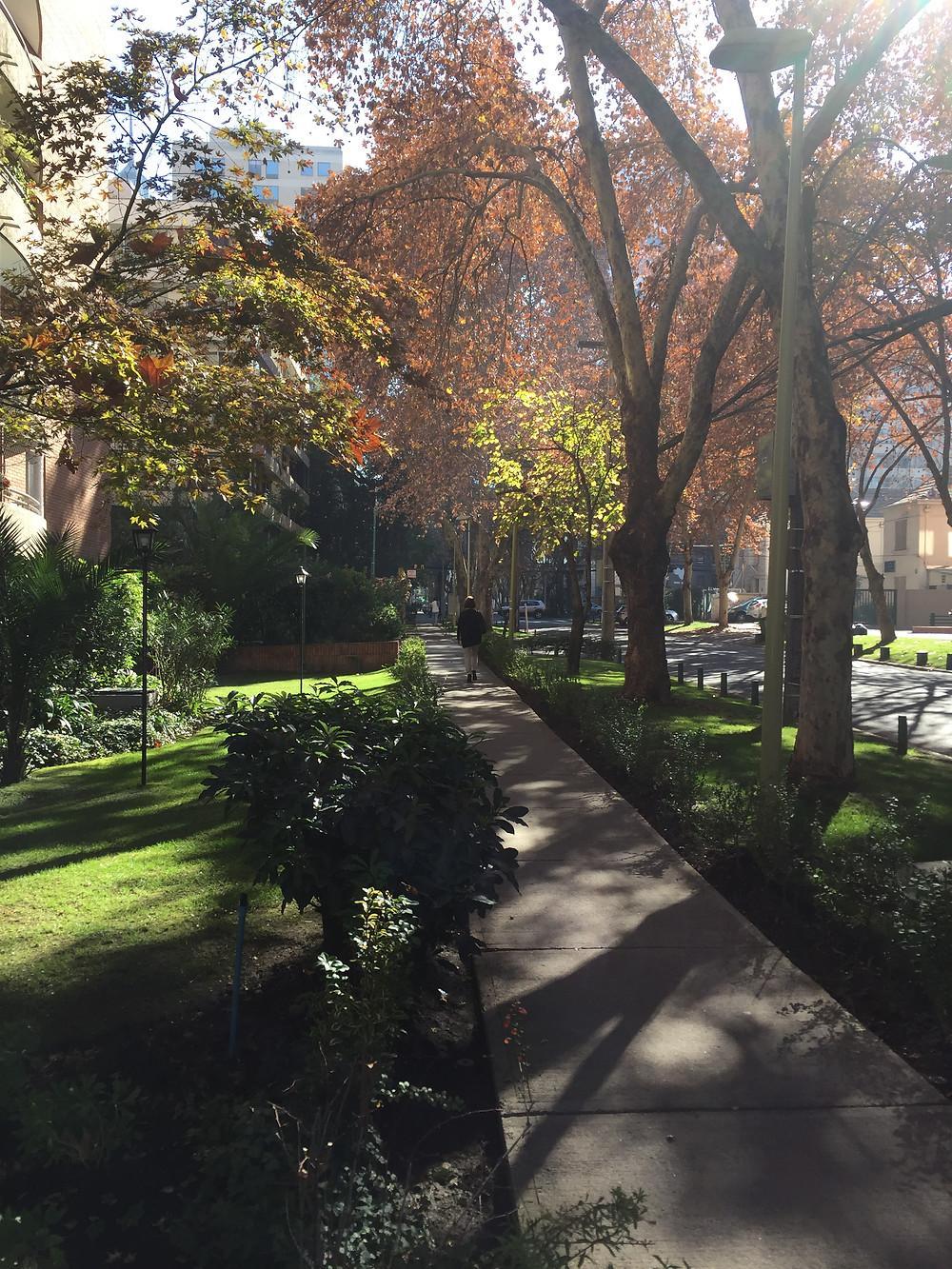 Tree lined street in downtown Santiago