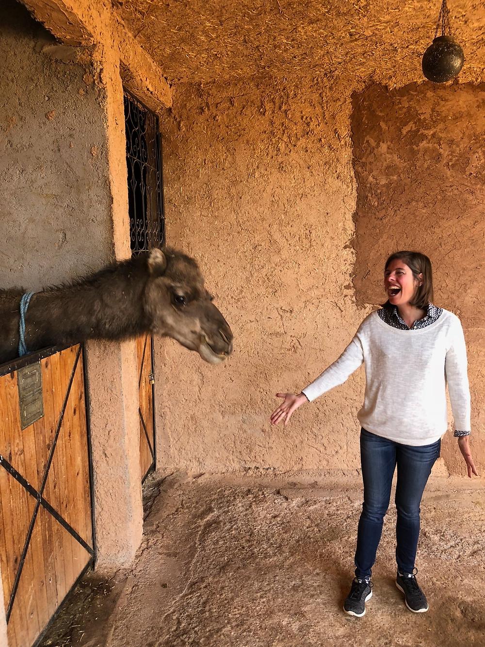 Pickle the Camel at Kasbah Tamadot