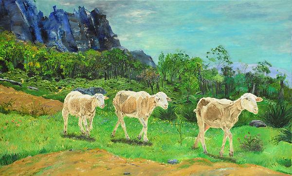 Spanish Sheep (2).jpg