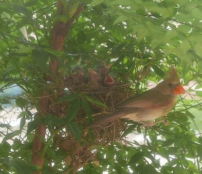 Mom & Baby Birds.jpg