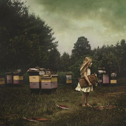 Honeybee, Honeybee, Where Can You Be?