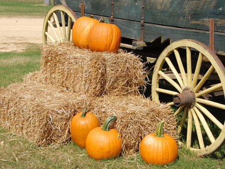 October Outings: Amy's Farm Tour & A Revolutionary War Living History Field Trip - Southern CA