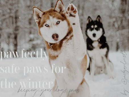 Paw-fectly Safe Paws for the Winter: Keeping your dog's paws healthy during the winter months