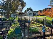 veggie garden.jpg