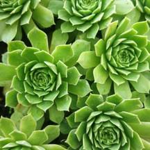 succulent 2.jpg