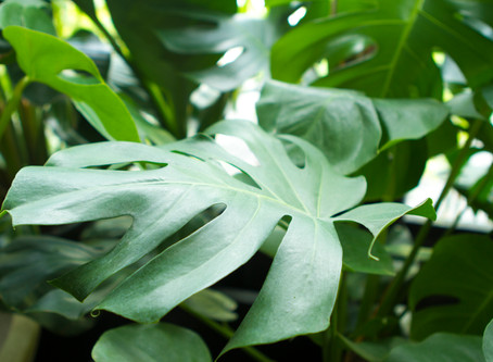 Lets Clear the Air with Indoor Plants