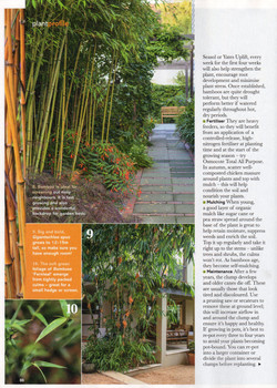Bamboo article