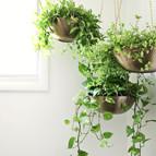 Hanging Plants_edited.jpg