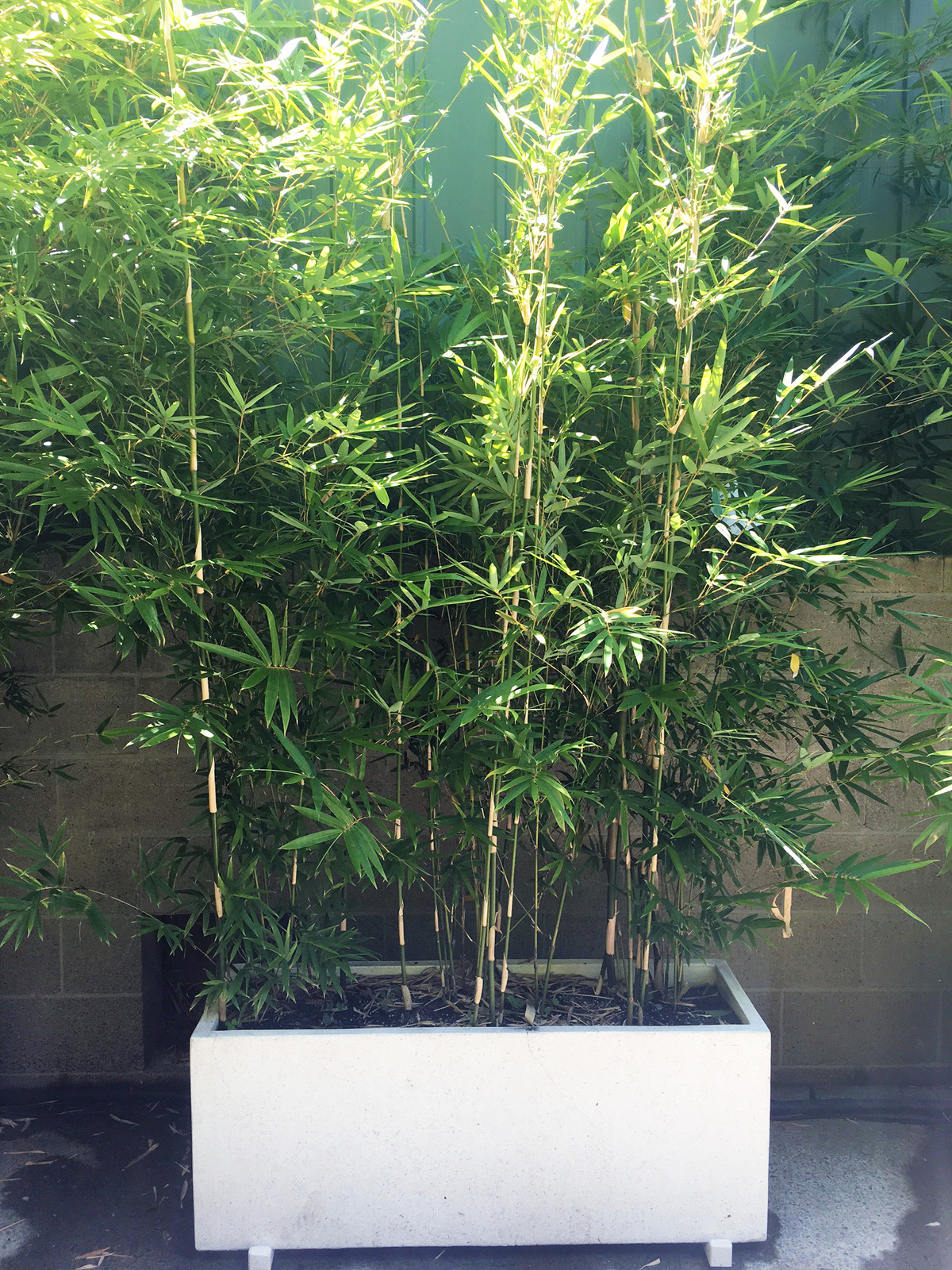 Bamboo Down Under Our Bamboo Range