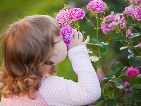 How to Create a Sensory Garden