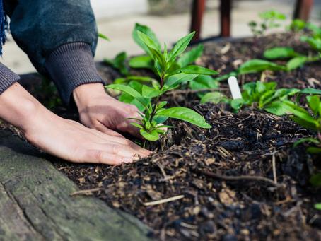5 Easy Ways to Winter Proof Your Garden