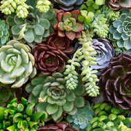 succulent assortment.jpg