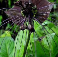 Batplant.jpg