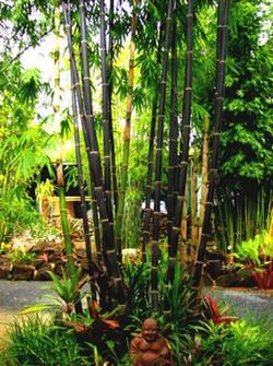 Java Black Bamboo