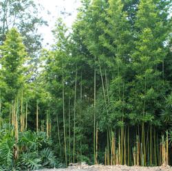 Temple Green Bamboo