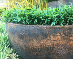 Pygmy Green Ground Cover Bamboo