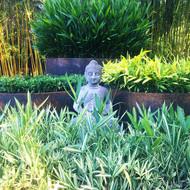 Ground Cover Bamboo Garden