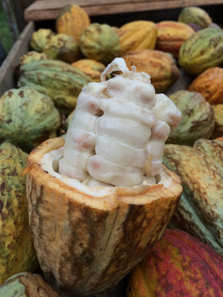 Tico Times Talks to One of Our Favorite Cacao Farmers