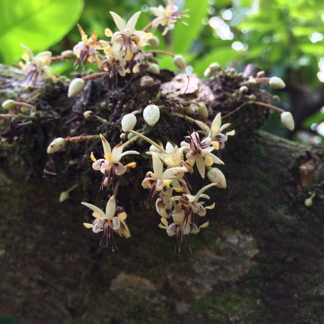 Visit a Cacao Plantation