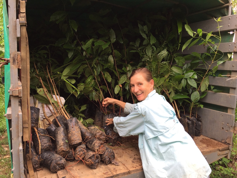 Help Jenny Plant Trees!